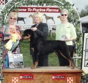 Rottweiler - Rottweiler Maplemor's Brooklyn v Evrmor - places 3rd ARC specialty