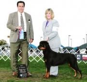 Rottweiler Maplemor's Brooklyn v Evrmor - Best of Winners
