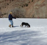 Rottweiler Maplemor's Brooklyn v Evrmor - tracking in snow