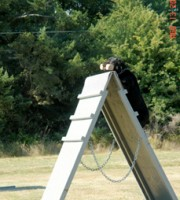 Rottweiler - Maverick - Takes the A frame in Shutzthund Obedience