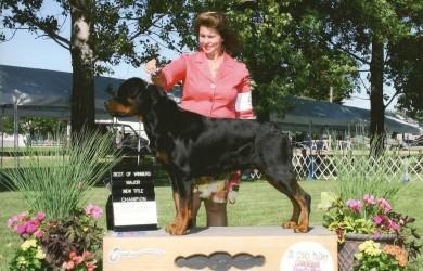 Gibbs Rottweiler Earns AKC CH