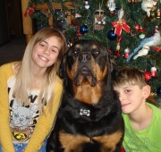 Rottweiler Troy and his