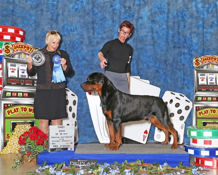 Bond wins 12 - 18 males at the ARC National Specialty