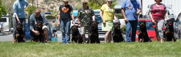 Rottweiler Matriarch Ava and some of her familly